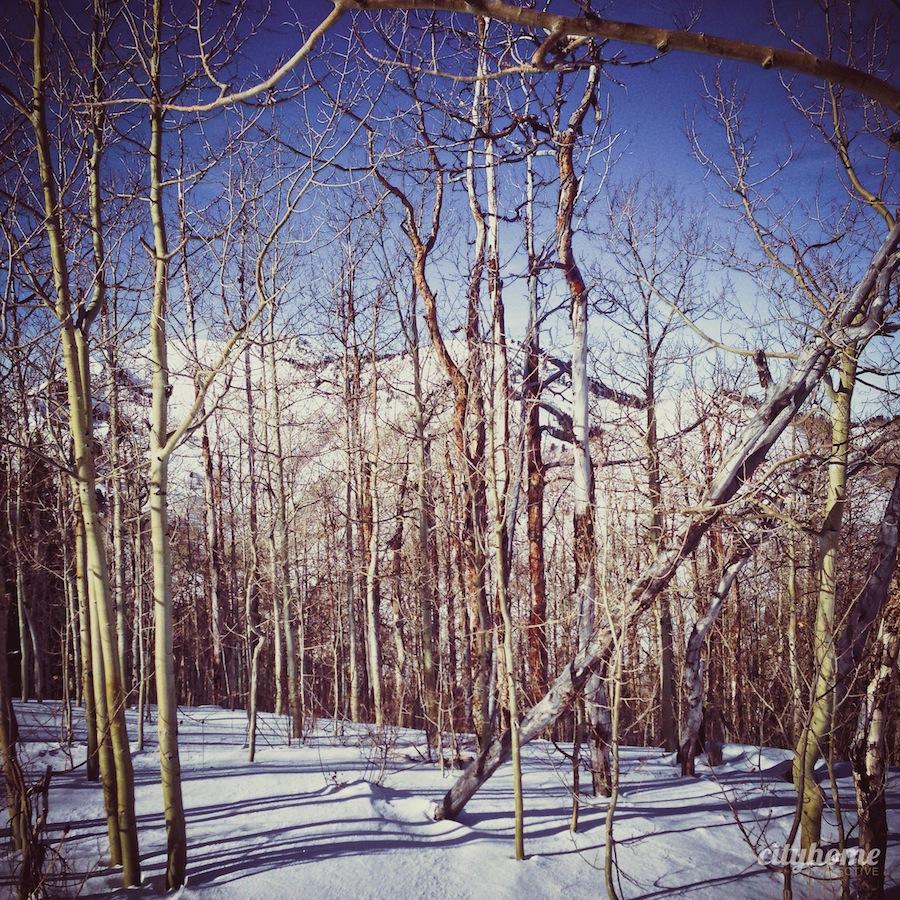 trail-run-cody-bottom-9