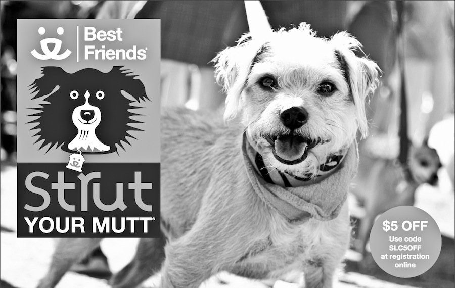 strut-your-mutt-1
