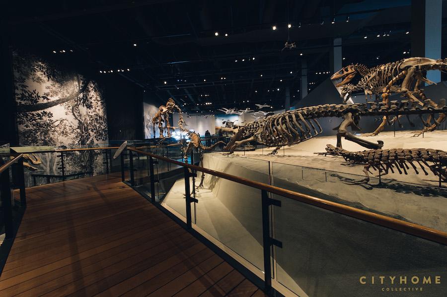 Natural History_WM-39