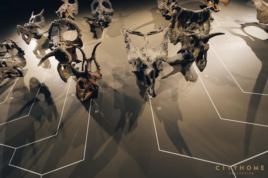 Natural History_WM-40