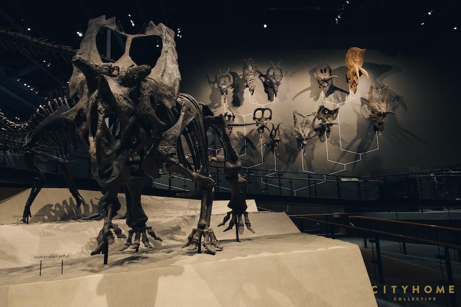 Natural History_WM-42