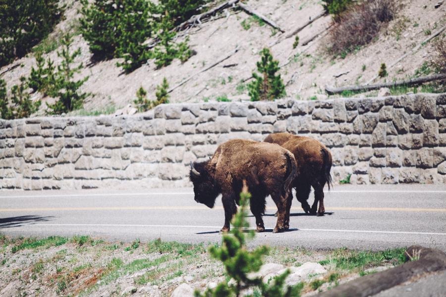 YellowstoneUnderCanvas-112