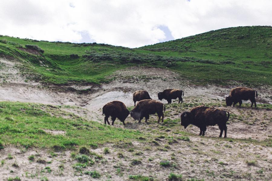 YellowstoneUnderCanvas-173