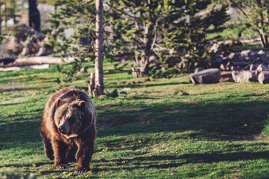 YellowstoneUnderCanvas-336